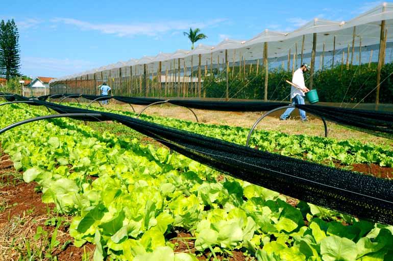 Fotos: Saulo Ohara - Participantes poderão conferir na Estação Agroecológica da Uenp técnicas aplicadas no cultivo orgânico de tomate, alface, feijão vagem e batata doce