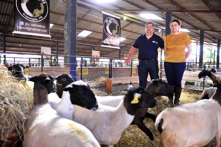 Os produtores José Henrique e Beatriz Ferdinandes deixaram a produção de leite para investir na ovinocultura: