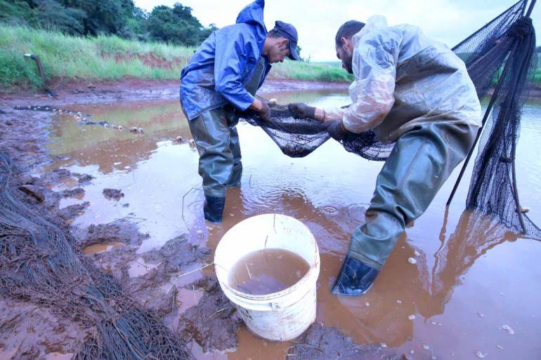 Fotos: Anderson Coelho - Os testes feitos em propriedade na Warta, mesmo com a baixa taxa de sobrevivência, deixou produtores animados com o cultivo do camarão-da-malásia