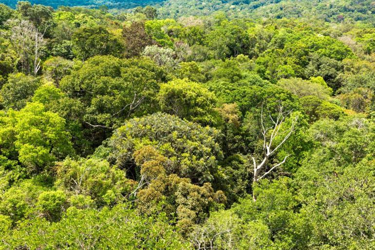 Shutterstock - Novas iniciativas de proteção ambiental na Amazônia devem, agora, ser engavetadas até que os recursos voltem
