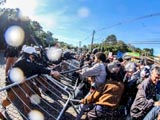 """Ilhados na Ópera de Arame, vereadores aprovam """"pacotaço"""" de Greca"""