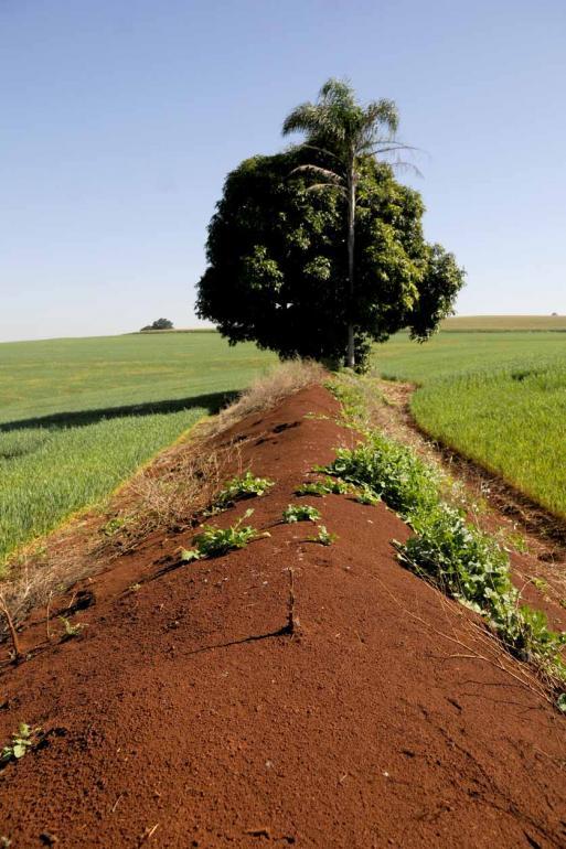 (Plantio direto) É uma ferramenta poderosa no controle do processo erosivo, desde que seja bem feito em conjunto com outras estratégias