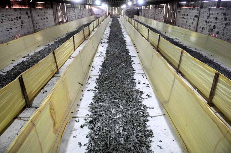 Ricardo Chicarelli - Trabalhar com o bicho-da-seda exige um trabalho contínuo, que demanda o dia todo do produtor
