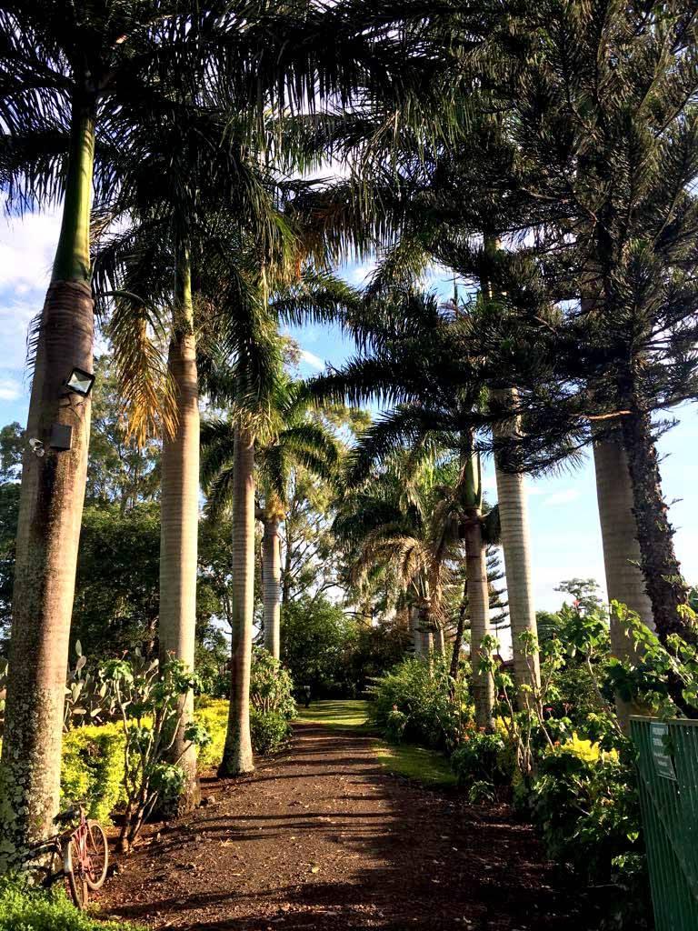 Frondosas palmeiras-imperiais abrem as portas do Resort Solar Águas do Ivaí aos apreciadores do turismo rural